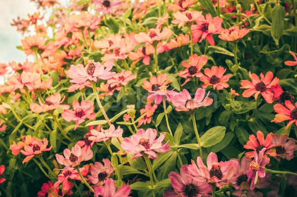 Flores vintage jardim natureza parque flor Foto stock © sweetcrisis