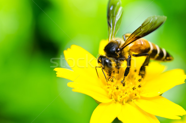 Photo stock: Abeille · peu · jaune · star · fleur · vert