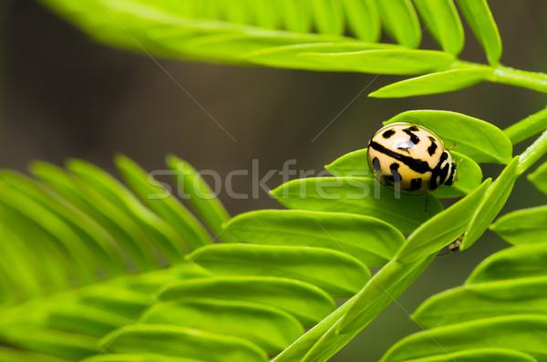Bogár zöld levél zöld természet szépség nyár Stock fotó © sweetcrisis