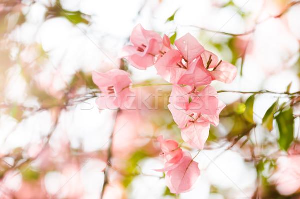 Papel flores jardim natureza parque primavera Foto stock © sweetcrisis
