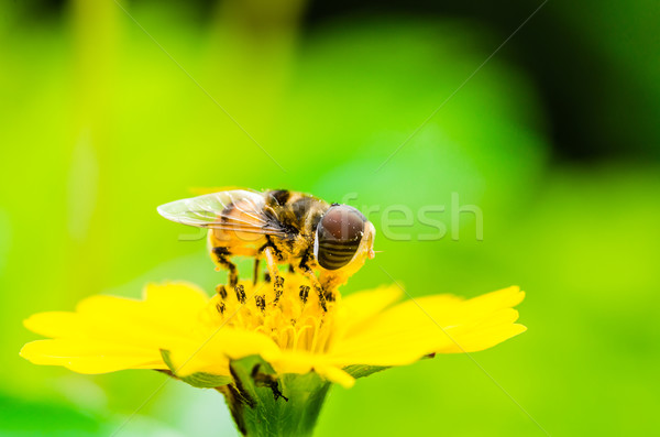 Gyümölcs akták virág makró zöld természet Stock fotó © sweetcrisis