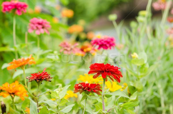 Virág virágoskert természet park boldog szépség Stock fotó © sweetcrisis