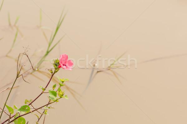 ピンクの花 庭園 自然 公園 タイ 葉 ストックフォト © sweetcrisis