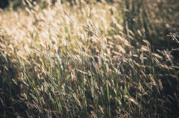 花 ヴィンテージ 雑草 庭園 自然 ストックフォト © sweetcrisis