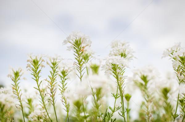 白い花 庭園 自然 公園 タイ 葉 ストックフォト © sweetcrisis