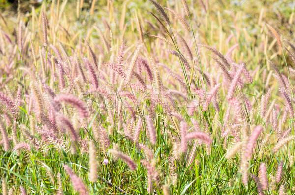Foto stock: Erva · daninha · natureza · flor · verde · amor · jardim