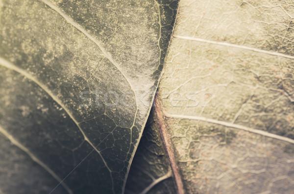 Makró levél mangó természet tavasz zöld Stock fotó © sweetcrisis