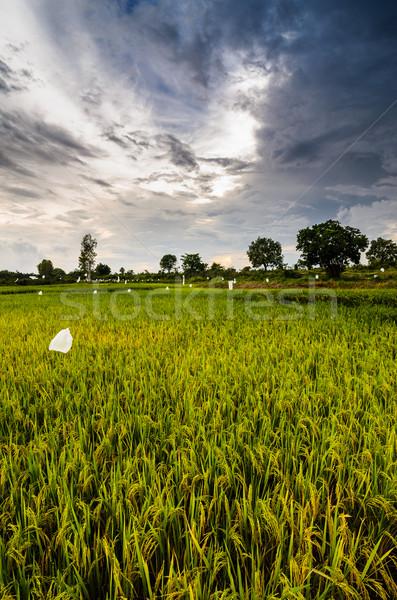 Таиланд сельского хозяйства промышленности области фермы Сток-фото © sweetcrisis