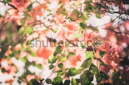 бумаги цветы саду природы парка весны Сток-фото © sweetcrisis