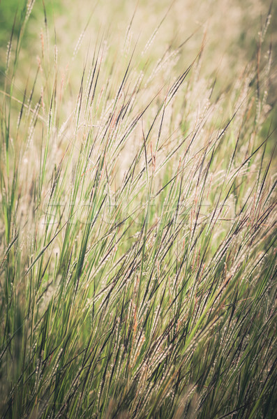 Pequeno flor vintage erva daninha jardim natureza Foto stock © sweetcrisis