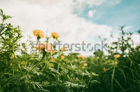 Flores jardim natureza parque flor beleza Foto stock © sweetcrisis