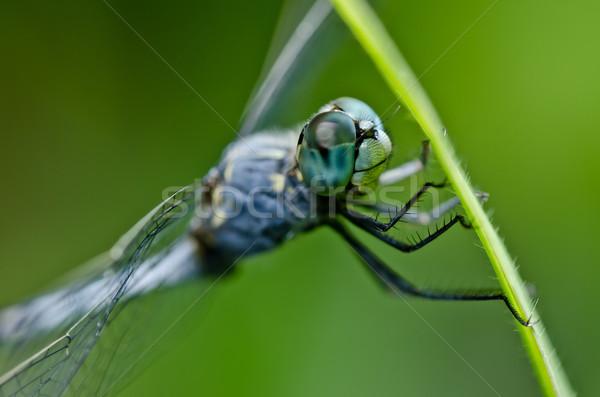 トンボ 緑 自然 庭園 笑顔 動物 ストックフォト © sweetcrisis