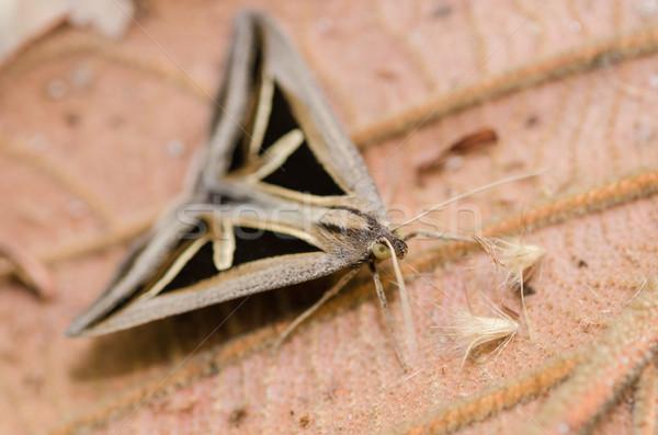 Moth Stock photo © sweetcrisis