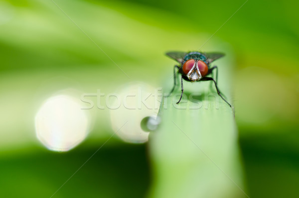 fly in green nature Stock photo © sweetcrisis