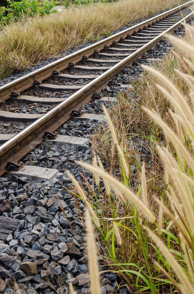 Foxtail weed and railway in the nature Stock photo © sweetcrisis