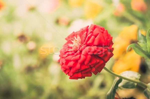Virág klasszikus zöld kert természet park Stock fotó © sweetcrisis