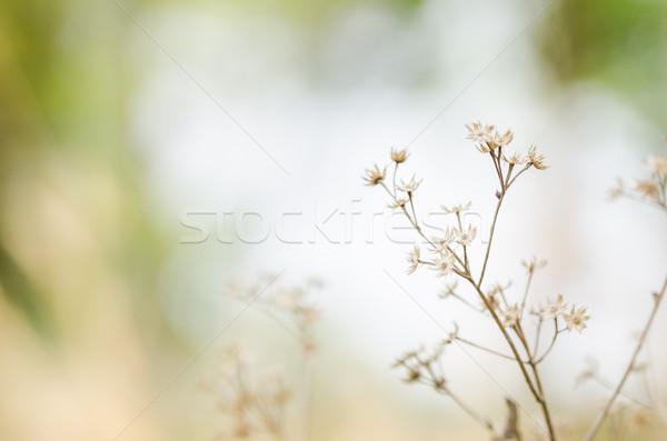花 工場 雑草 自然 庭園 春 ストックフォト © sweetcrisis