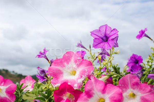 Jardim natureza parque folha verão verde Foto stock © sweetcrisis