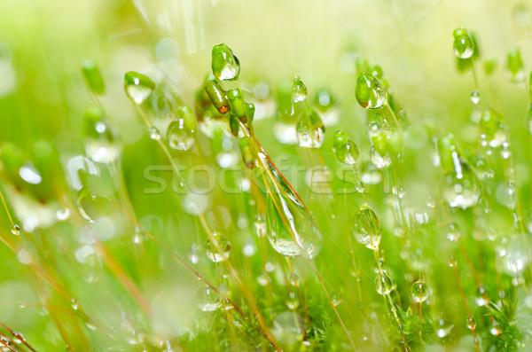 Foto stock: Fresco · musgo · gotas · de · água · verde · natureza · macro