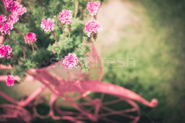 Rózsaszín virág klasszikus kert természet park Thaiföld Stock fotó © sweetcrisis