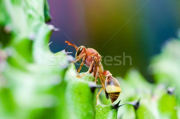 ワスプ サボテン マクロ 緑 自然 庭園 ストックフォト © sweetcrisis
