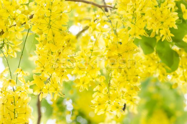 シャワー 花 自然 公園 ストックフォト © sweetcrisis