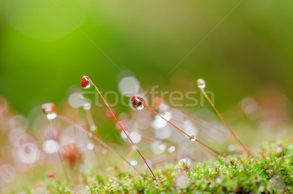 Foto stock: Musgo · gotas · de · água · natureza · água · grama · jardim