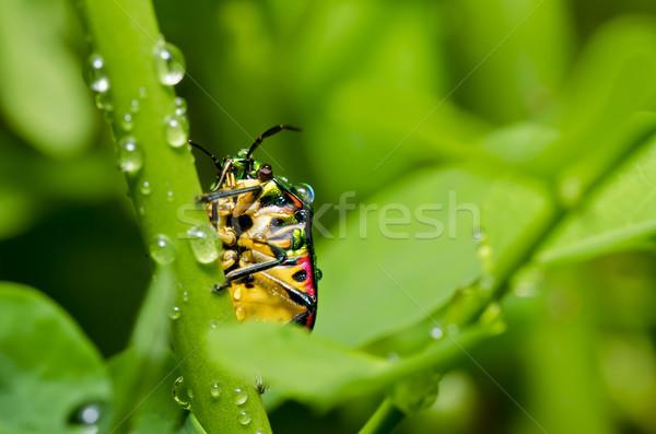 Juweel kever groene natuur tuin voorjaar Stockfoto © sweetcrisis