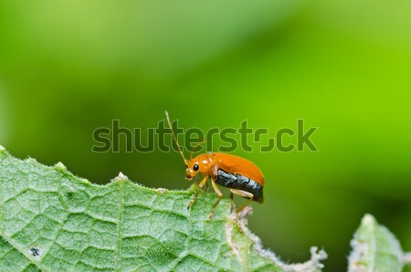 orange beetle in green nature or in the garden Stock photo © sweetcrisis