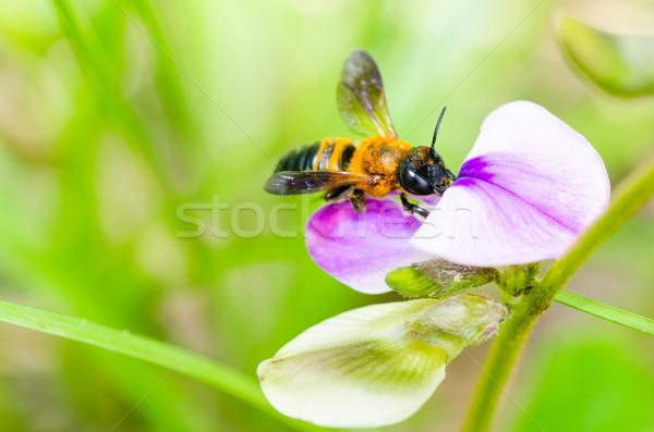 Abeja macro verde naturaleza abejas jardín Foto stock © sweetcrisis