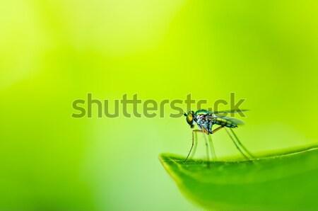 Stock fotó: Pók · természet · kert · zöld