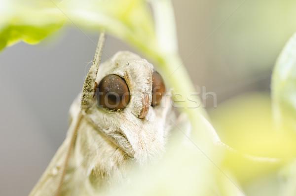 Nature environnement vert nuit volée blanche Photo stock © sweetcrisis