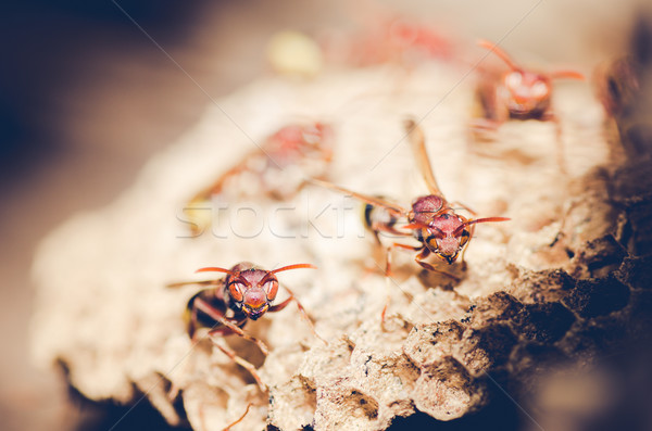 Wesp nest bruin kolonie insect witte Stockfoto © sweetcrisis