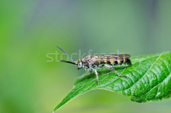 Vespa verde natureza jardim fundo abelha Foto stock © sweetcrisis