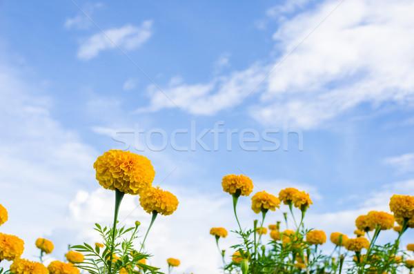 Stok fotoğraf: çiçek · doğa · bahçe · kafa · bitki · Asya