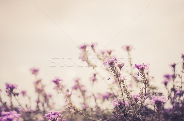 Vad kicsi virágok klasszikus kert természet Stock fotó © sweetcrisis