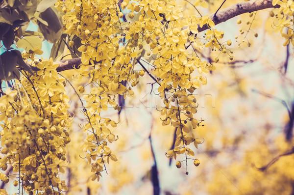 душу цветок Vintage природы Сток-фото © sweetcrisis