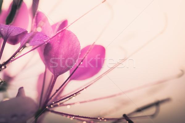 Aranha flor planta jardim natureza parque Foto stock © sweetcrisis