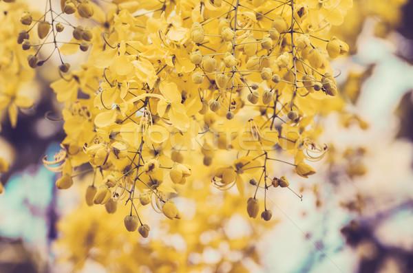シャワー 花 ヴィンテージ 自然 ストックフォト © sweetcrisis