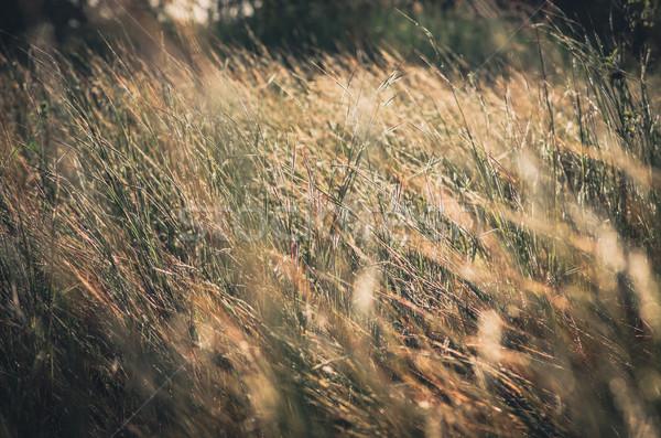 Kicsi virág klasszikus gaz kert természet Stock fotó © sweetcrisis