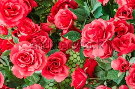 Rosa vermelha flor jardim de flores natureza amor rosa Foto stock © sweetcrisis