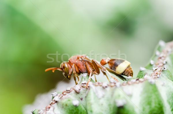 ワスプ サボテン 緑 自然 庭園 ストックフォト © sweetcrisis