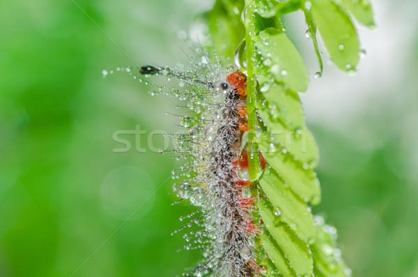 Worm verde natura giardino alimentare ape Foto d'archivio © sweetcrisis