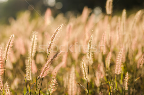 Erva daninha natureza flor verde jardim cor Foto stock © sweetcrisis