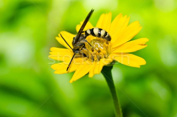 ワスプ 緑 自然 森林 背景 蜂 ストックフォト © sweetcrisis