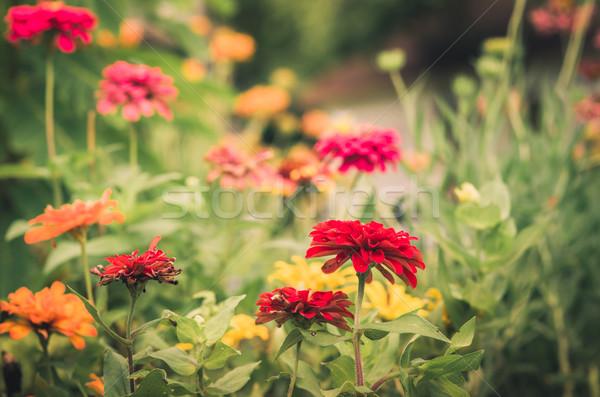 花 ヴィンテージ 自然 公園 美 ストックフォト © sweetcrisis
