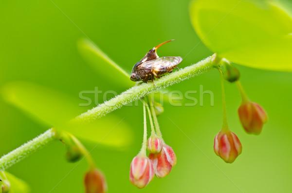 Insecte vert nature jardin Photo stock © sweetcrisis