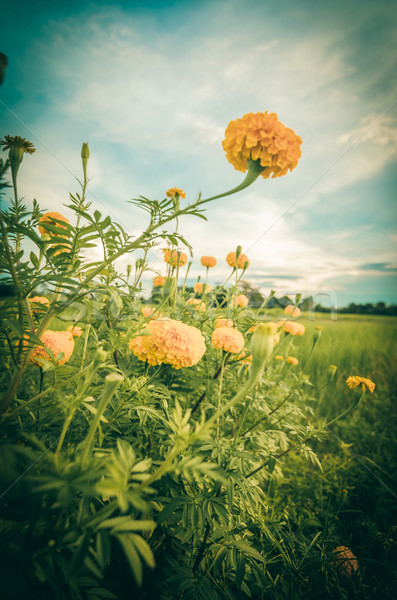 Virág klasszikus természet kert esküvő fej Stock fotó © sweetcrisis