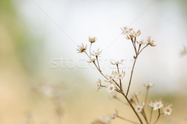 Virág növény gaz természet kert tavasz Stock fotó © sweetcrisis