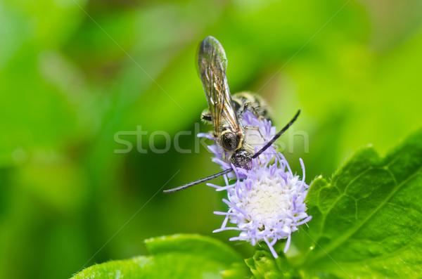 ワスプ 緑 自然 庭園 背景 蜂 ストックフォト © sweetcrisis